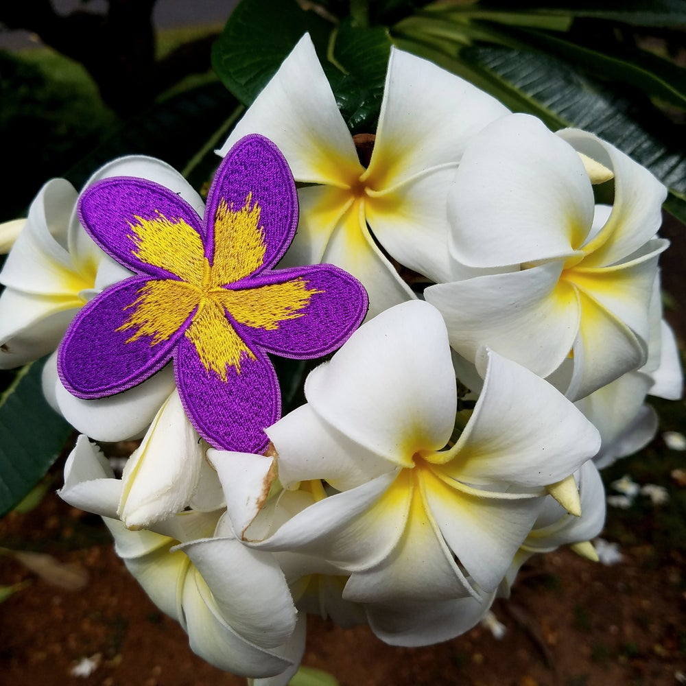 Image of Purple Plumeria
