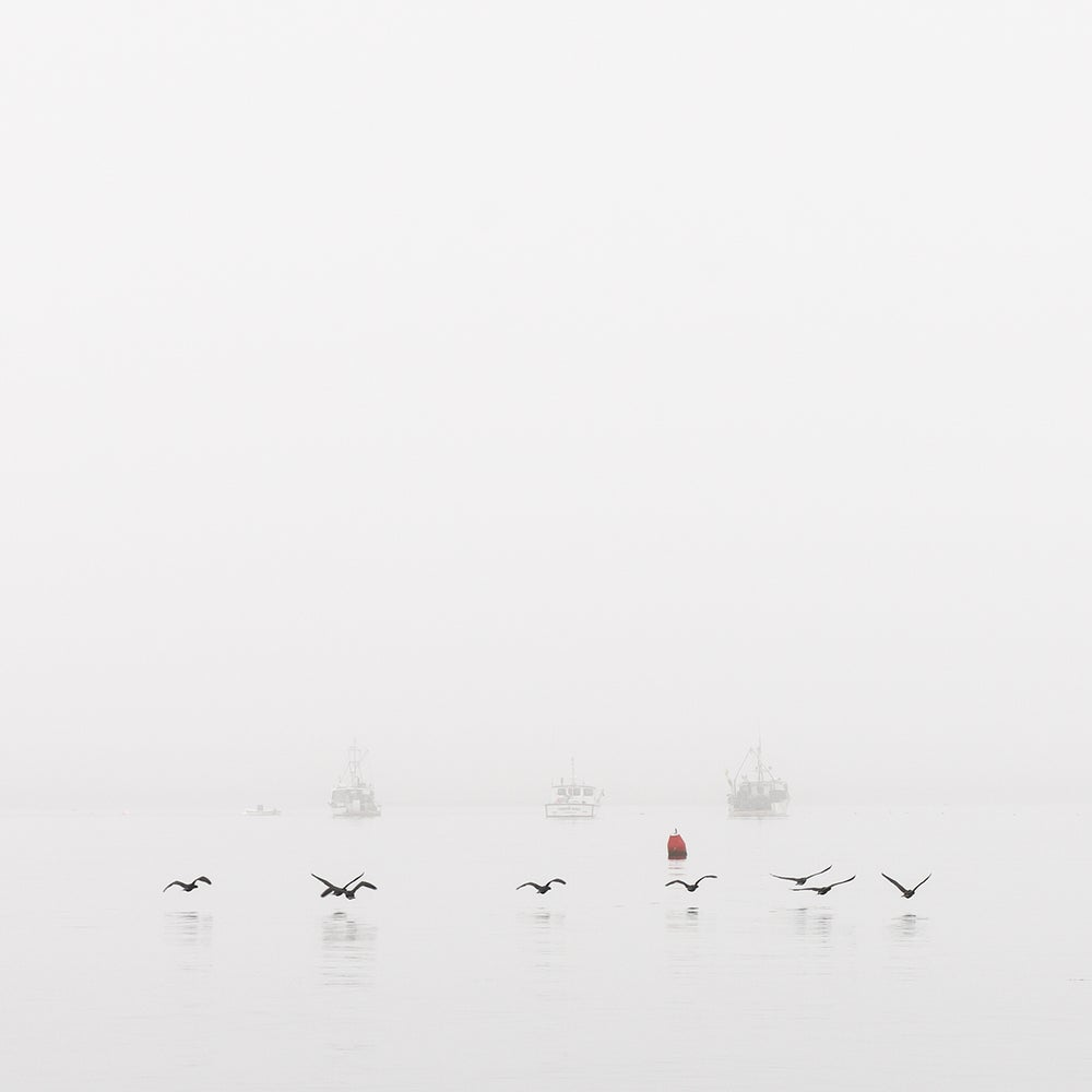 Image of Ferry Beach Fog