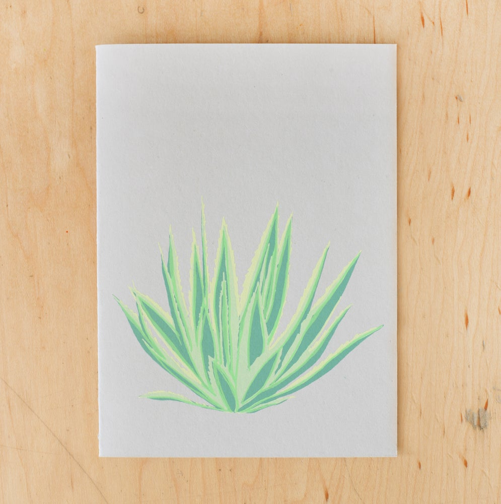 Image of Agave