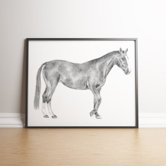 Image of Horse Pencil Study limited edition handsigned print
