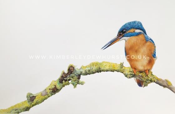 Image of 'Kingfisher'