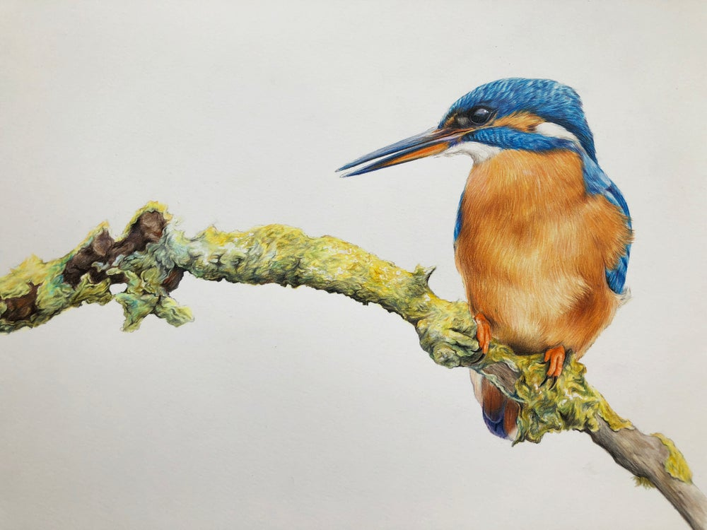 Image of 'Kingfisher'
