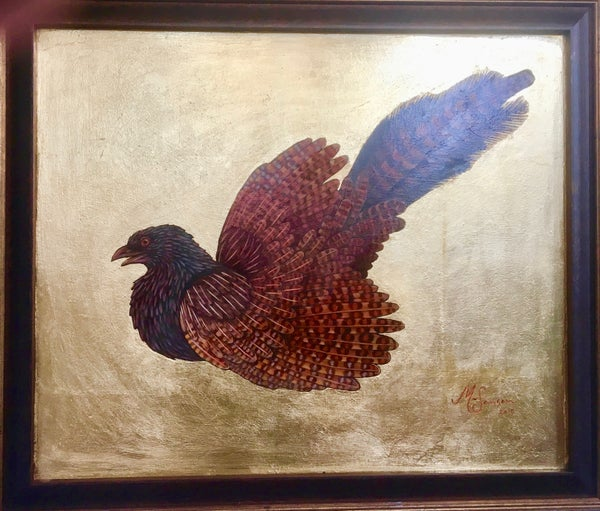 Image of Coukal Pheasant by Matthew Sansom (Australia)