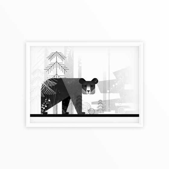 Image of Bear