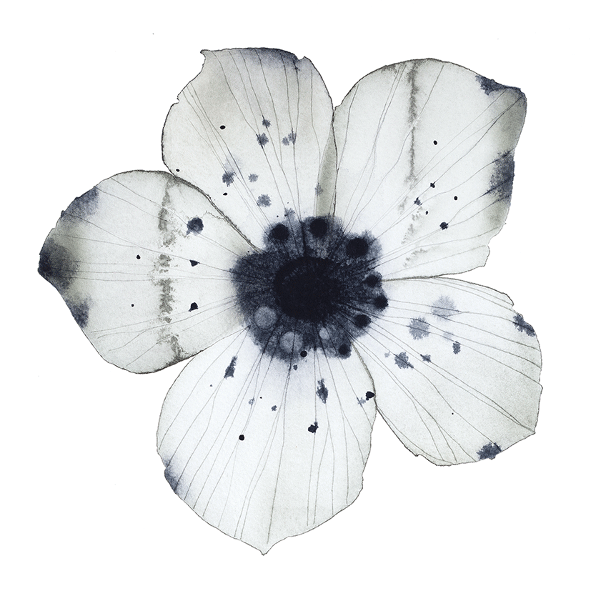 Image of Flower portrait No1