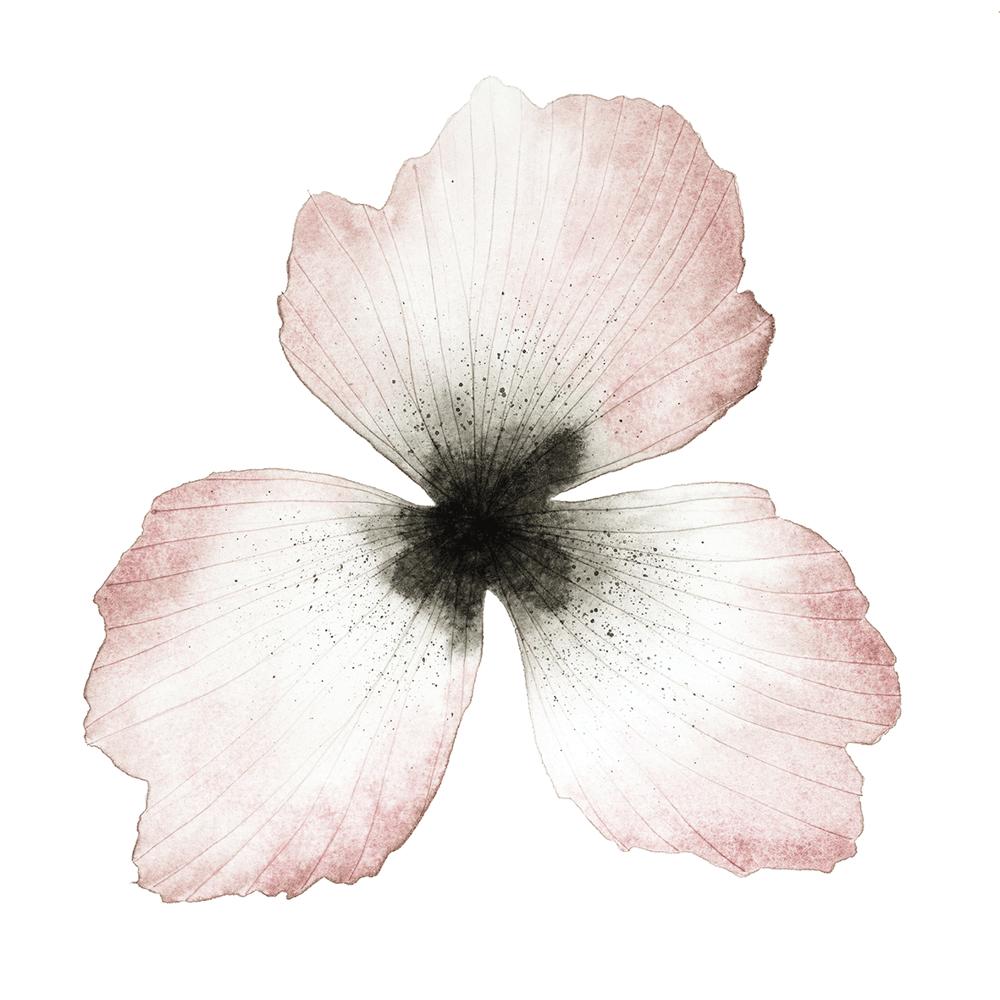 Image of Flower Portrait No 2