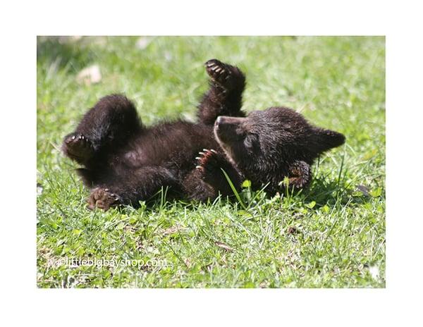 Image of Four Cub photos