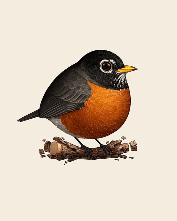 Image of American Robin