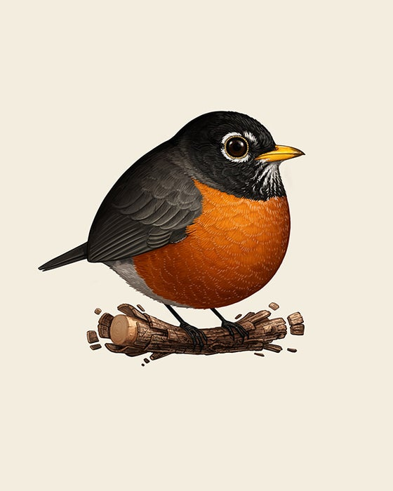 Image of American Robin