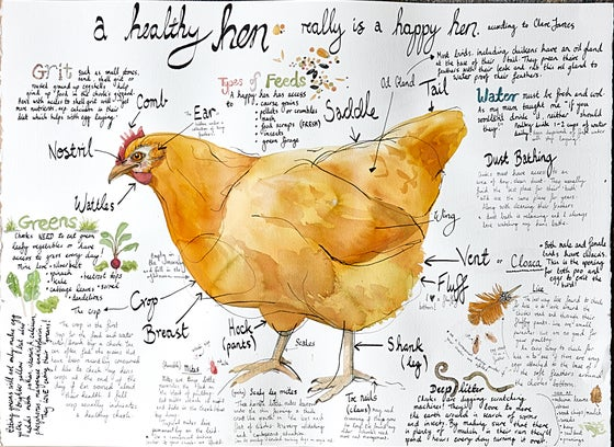 Image of A Healthy Hen (poster)
