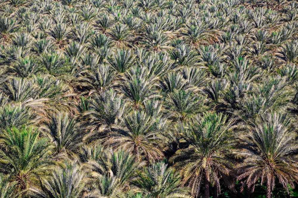 Image of Océan de palmiers