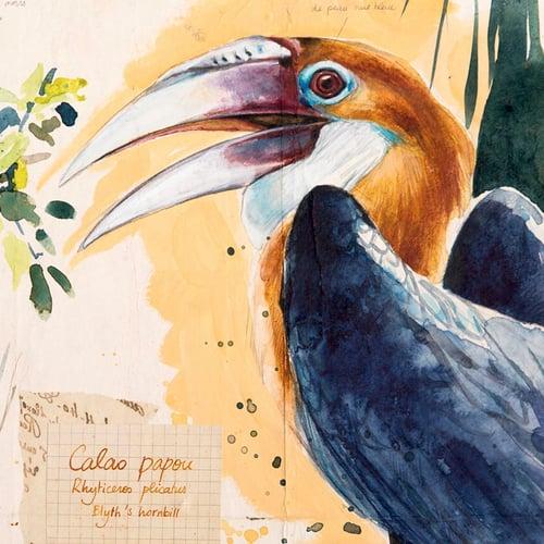 "Image of Paper Art Print - ""Calao papou"""