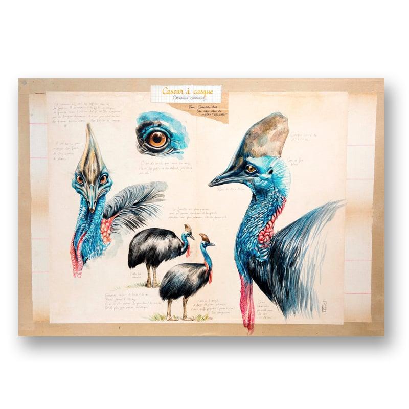 """Image of Paper Art Print - """"Casoar à casque"""""""