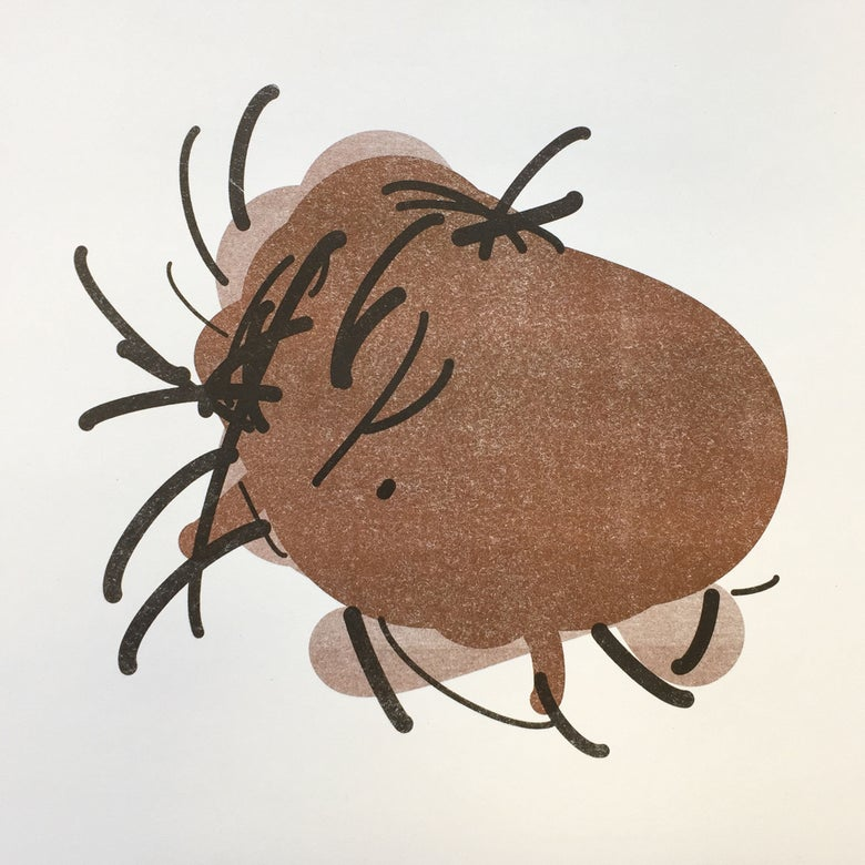 Image of Tick