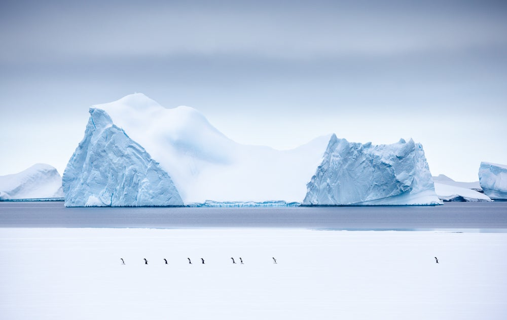 Image of Limited Edition Fine Art Print - March of the Penguins
