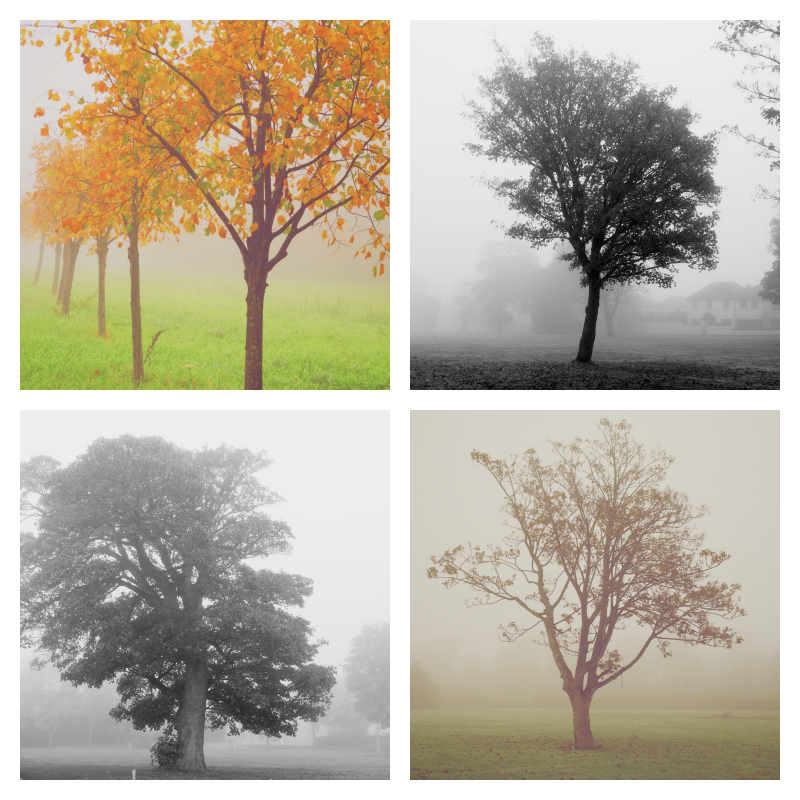 Image of Misty Morning Photo Set