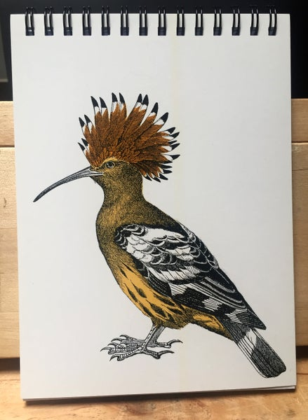 "Image of European Hoopoe 5""x7"" Notepad"