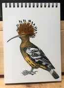 "Image 1 of European Hoopoe 5""x7"" Notepad"