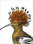 "Image 2 of European Hoopoe 5""x7"" Notepad"