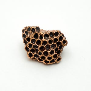 Image of Small Wasp Nest Display