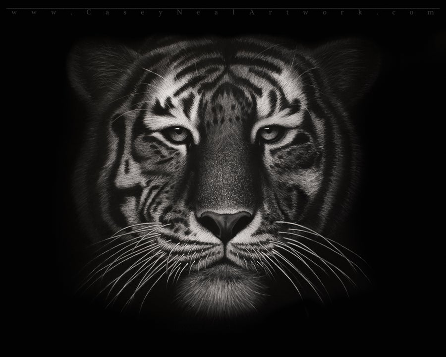 Image of Charcoal Tiger