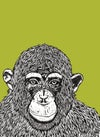 'chimp peace' avacado