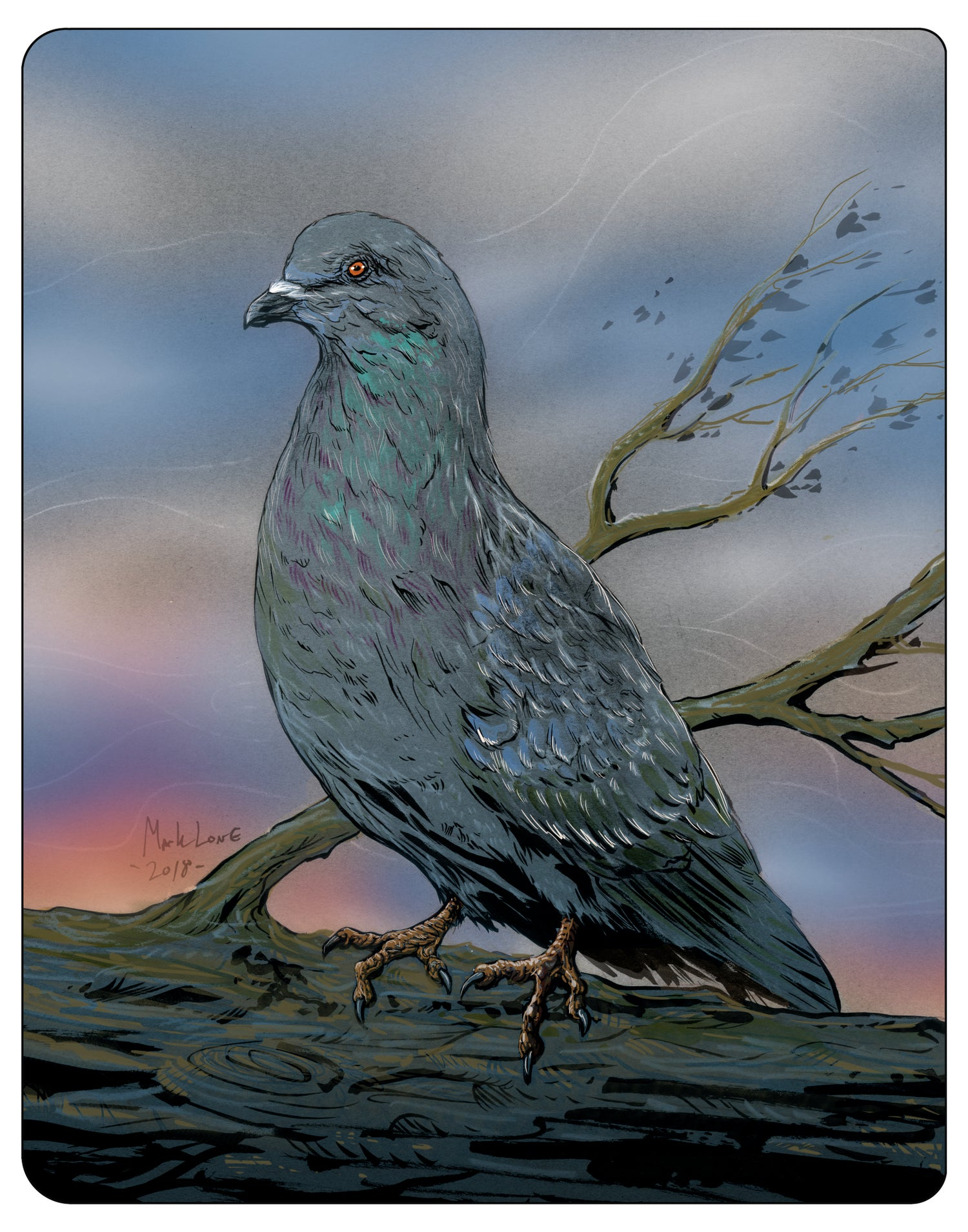 Image of Pigeon