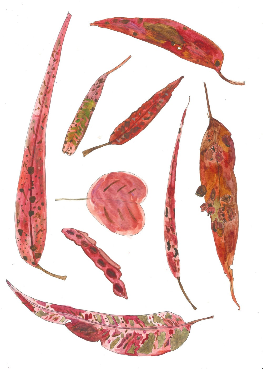 Image of Red and Pink Leaves