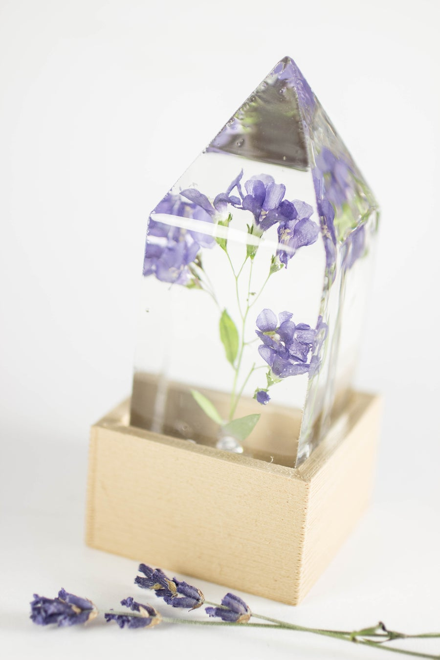 Image of Jacob's Ladder (Polemonium reptans) - Floral Desk Light #4