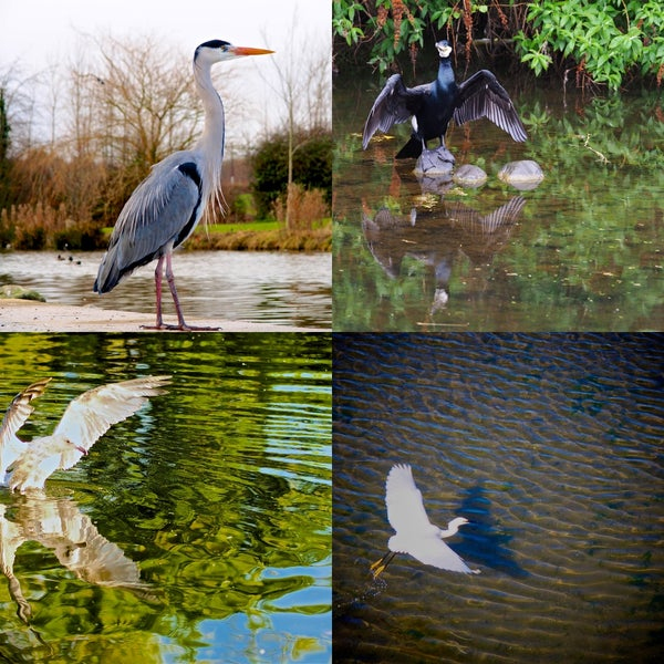 Image of Iconic Birds of Ireland - Edition 1