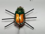 Image of Japanese Beetle Bug