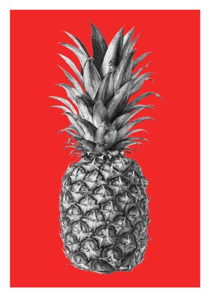 Image of Rainforest Rewild Pineapple - Colour Editions From
