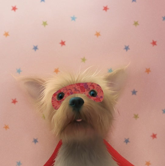 Image of Super Yorkie