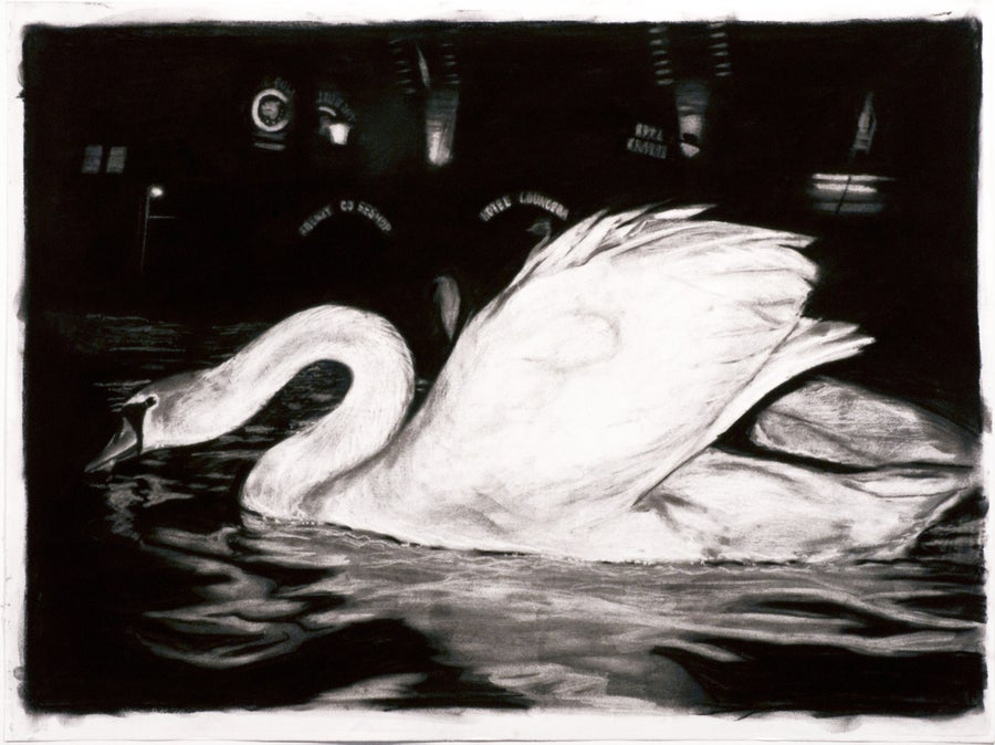 Image of Swan Study 1 / Joe Holbrook