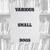 Image of Various Small Dogs - Dan Varenka
