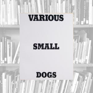 Image of Various Small Dogs - Dan Varenka