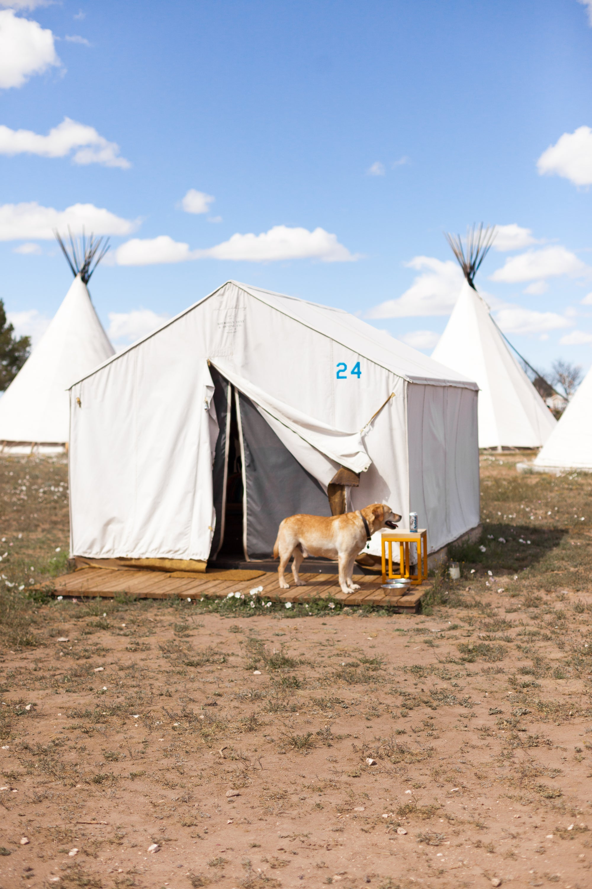 Image of MARFA MAN'S BEST FRIEND