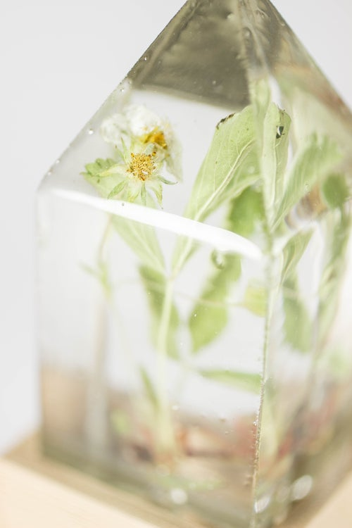 Image of Wild Strawberry (Fragaria virginiana) - Floral Prism Desk Light #1