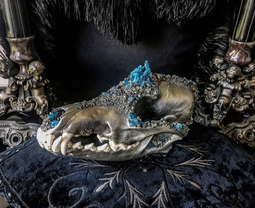Image of Blue Apatite - Coyote Skull