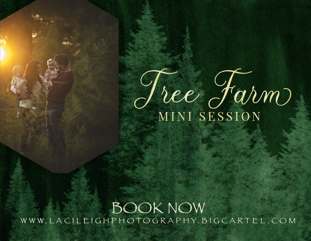 Image of Christmas Tree Farm Sessions