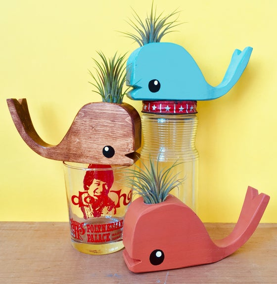 Image of Tiny Wooden Whale With Airplant - Walnut, Turqoise or Orange