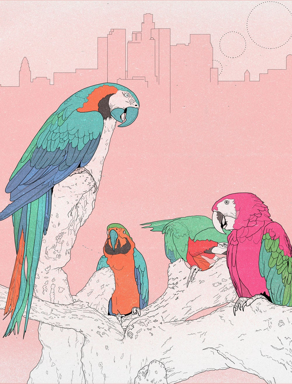Image of Animals of Los Angeles, Parrots