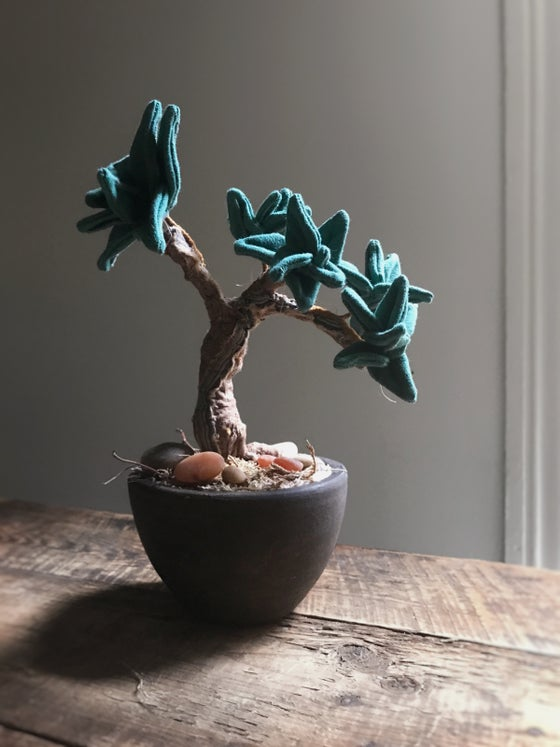 Image of Succulent Bonsai
