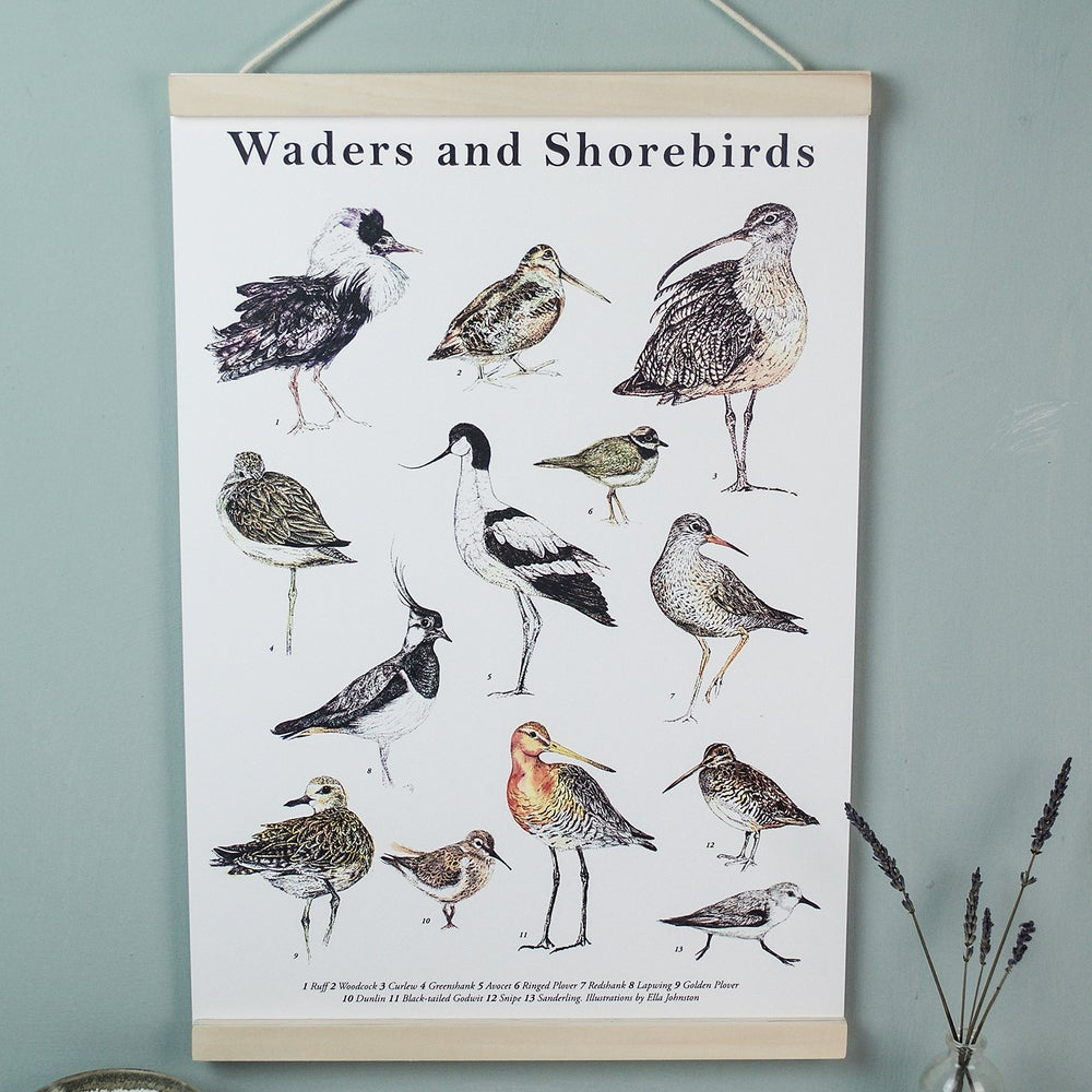 Image of Illustrated Guide to Waders and Shorebird Fine Art A3 Giclée Print