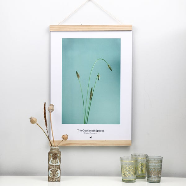 Image of The Orphaned Spaces, Hoary Plantain Still Life, Limited Edition Poster