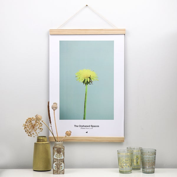 Image of THE ORPHANED SPACES, MOUSE-EAR HAWKWEED STILL LIFE, LIMITED EDITION POSTER