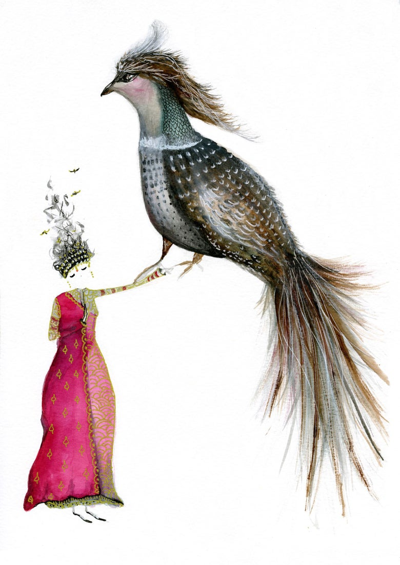 Image of Indian Pheasant