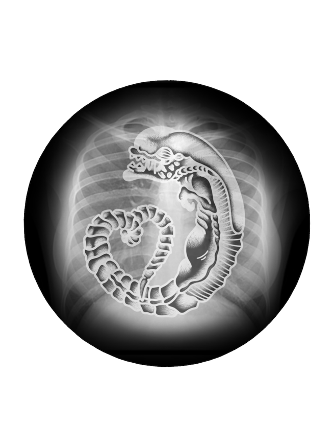 Image of Xenomorph X-Ray by PON (Button, Magnet & Sticker)