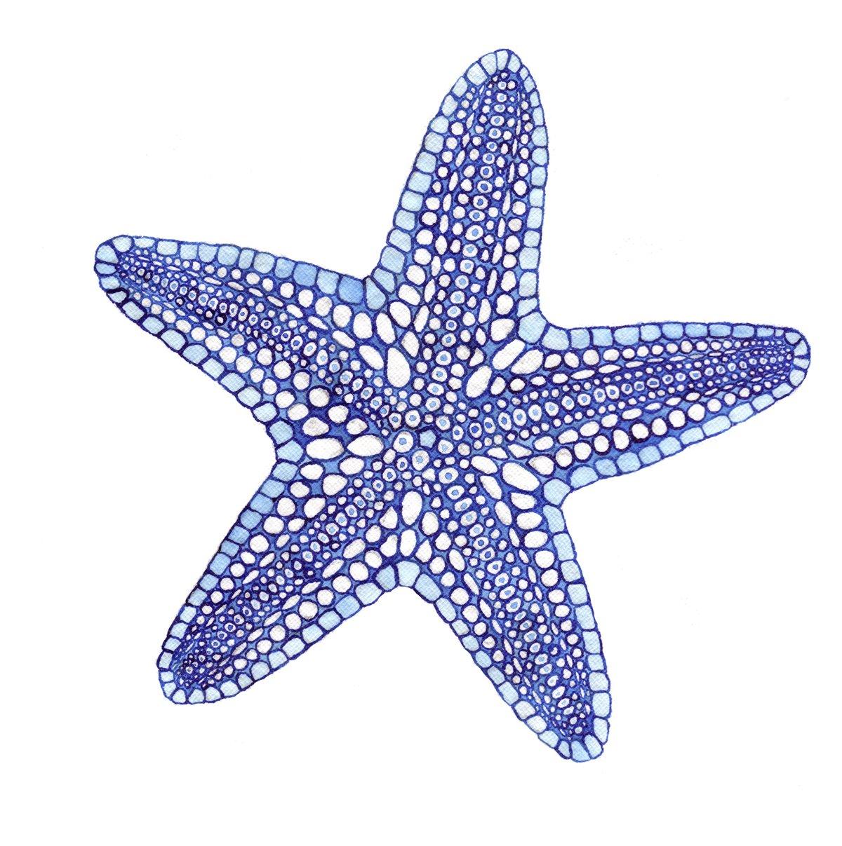 Blue Starfish Print