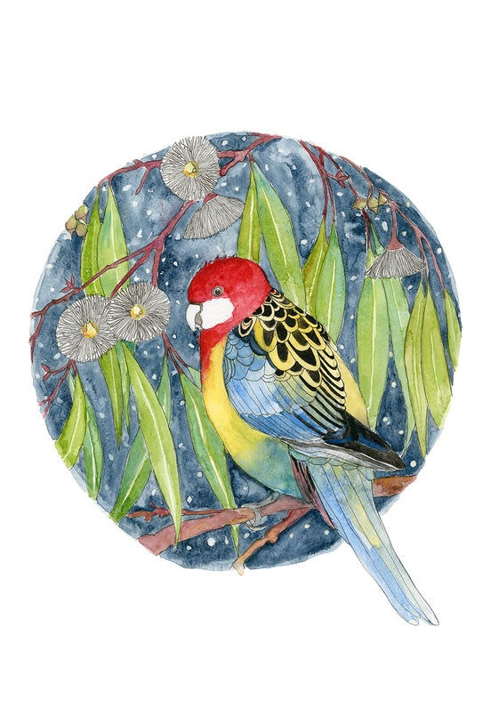 Image of Eastern Rosella - Limited Edition Print